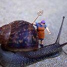 Pest Control by Mark Wilson