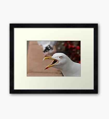 Squawking Seagull Framed Print