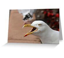 Squawking Seagull Greeting Card
