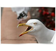 Squawking Seagull Poster