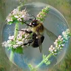 Bubble Bee by Brenda Boisvert