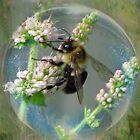 Bubble Bee by Brenda Boisvert