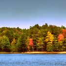 Lake Whittemore in Autumn by Monica M. Scanlan