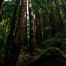 Ocean View Trail, Muir Woods (8/15/2010) by Rodney Johnson