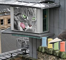 Rooftop Drama - Pigeon Taunts Cat by simpsonvisuals