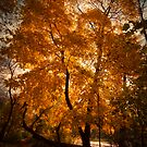 Fall is Here by makbet666