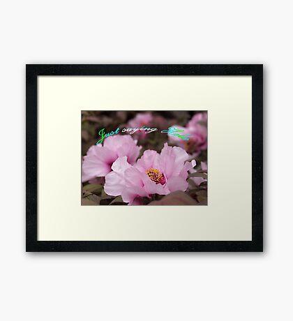 Pink Tree Peonies  Framed Print