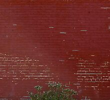 Lone plant on brick wall by Dian  Squire