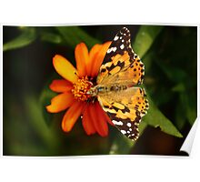 Butterfly Fullview Poster