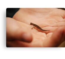the tiniest chameleon - madagascar Canvas Print