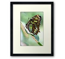 Madame Butterfly - Original Framed Print
