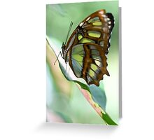 Madame Butterfly - Original Greeting Card