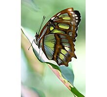 Madame Butterfly - Original Photographic Print