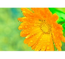 Orange Flower With Waterdrops Macro Photographic Print