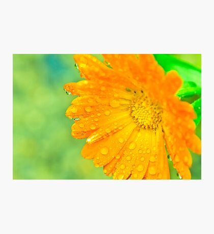 Orange Flower With Waterdrops Macro Photographic Print
