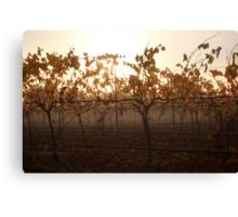Autumn Fog In The Vineyard Canvas Print