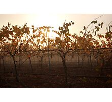 Autumn Fog In The Vineyard Photographic Print