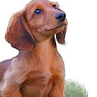 Dachshound puppy & butterfly by Cazzie Cathcart