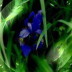Iris Encased by Debbie Robbins