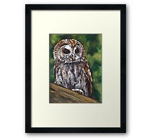Tawny Owl in Oil Pastel, Wildlife Art Framed Print