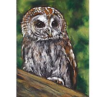 Tawny Owl in Oil Pastel, Wildlife Art Photographic Print