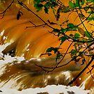 Sturgeon Falls 1 by Larry Trupp