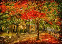 First signs of fall  II by LudaNayvelt