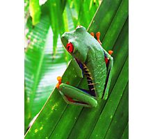 Red-eyed green tree frog Photographic Print