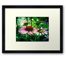 Cone Flowers ©  Framed Print