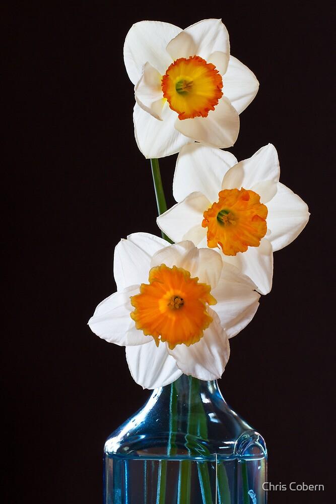 Three Daffodils by Chris Cobern