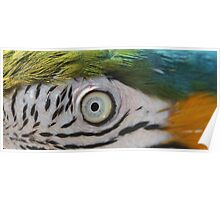 Inky Macaw Poster