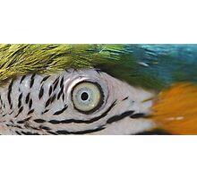 Inky Macaw Photographic Print