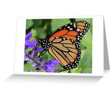 Monarch 1 Greeting Card