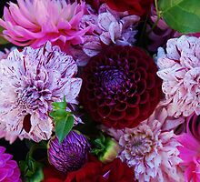 The diversity of Dahlias by Marjorie Wallace