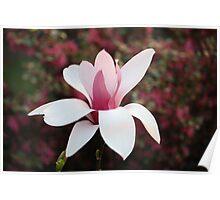 Imperfect magnolia Poster
