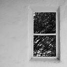 Window... by Catherine Davis