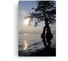 Cypress Sun! Canvas Print