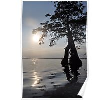 Cypress Sun! Poster