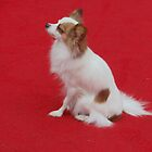 "Red Carpet Papillon: aka ""Mr. De Mille, I'm ready for my close up"" by leystan"