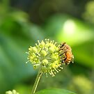 Honey Bee! by vasu