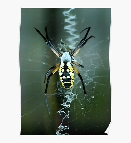 Spider! Poster
