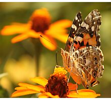 Butterfly! Photographic Print