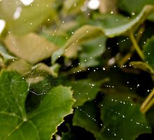 Spider Web by MarieKathleen