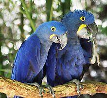I'm blue da bu de da by Kendal Dockery