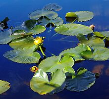 Water-lilies garland by algill