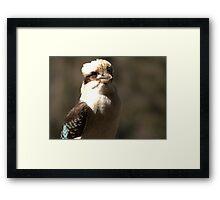Kookaburra Dreaming Framed Print