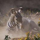 Zebra in the dust by algill