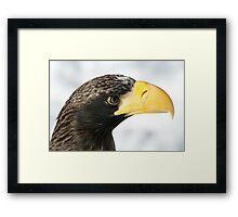 Steller's Sea Eagle  Framed Print