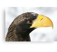 Steller's Sea Eagle  Canvas Print