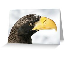 Steller's Sea Eagle  Greeting Card